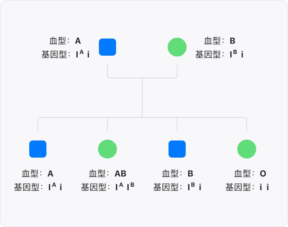 ABO血型的遗传背景